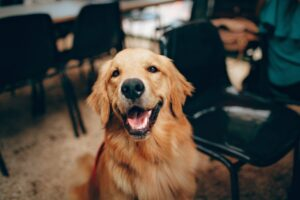 Dog Owners Live Longer, Lose Weight More Easily And Are In A Better Mood